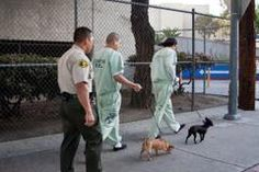 Custody Canine Program Inside LA Co. Men's Central Jail Teaches Inmates How to Train & Care for (rescued) Dogs