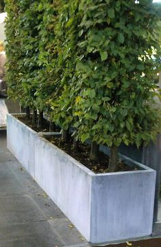 Garden Design Ideas : outdoor planters by outer eden – Titanium zinc with Hornbeam planting Zinc Planters, Trough Planters, Outdoor Planters, Concrete Planters, Contemporary Garden Furniture, Tropical Patio, Backyard Playhouse, Porche, Diy Pergola