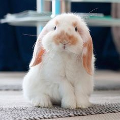 Animals And Pets, Funny Animals, Cute Animals, Funny Rabbit, Bunny Care, Bunny And Bear, Animal Species, Cute Bunny, My Animal