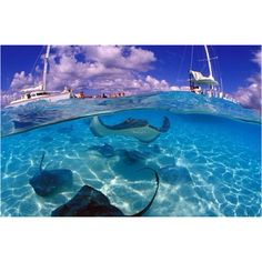 Swimming with stingrays in Grand Cayman!!!