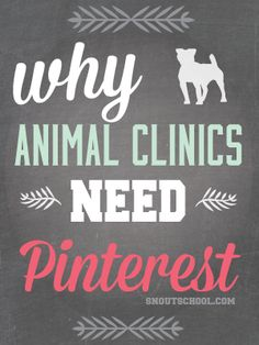 veterinary hospitals need pinterest - pinning tips for veterinarians