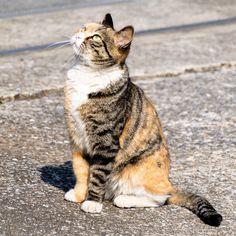 ねこだにゃん  #猫#ネコ#cat#地域猫## #動物#animal #かわいい#kawaii#cute #風景#自然#景色#picture#landscape#nature #東京#日本#tokyo#japan#love#loves_nippon #写真好きな人と繋がりたい #おしゃんぽ #一眼レフ