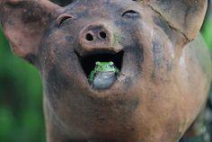 Chistes pelados para whatsapp casa cerdo