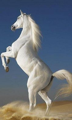 Beautiful white horse in the world Beautiful Horse image designs for desktop. There is The most beautiful white horse in the world. All White horses images are there. HD Beautiful white horse in the world 2013 Photo Shoot and Wallpaper Designs. Most Beautiful Horses, All The Pretty Horses, Animals Beautiful, Beautiful Creatures, Animals Amazing, Beautiful Unicorn, Stunningly Beautiful, Beautiful Images, Majestic Horse