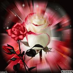 Have a beautiful çiçek gifs Flowers Gif, Beautiful Rose Flowers, Beautiful Gif, Beautiful Flowers, Gif Pictures, Love Pictures, Beau Gif, Love You Images, Rosa Rose