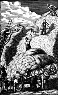 Gwen Raverat wood engraving, Ricking, Farmer's Glory 134 x 84mm, block cut 1934.