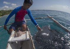 Un tuffo con gli squali balena