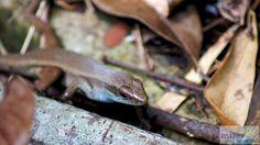 - Check more at https://www.miles-around.de/asien/malaysia/insel-hopping-tour-im-tunku-abdul-rahman-nationalpark/,  #Borneo #Dschungel #KotaKinabalu #Malaysia #Nationalpark #Natur #Reisebericht