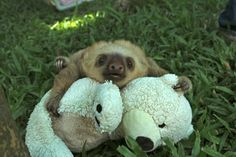 20 Pictures That Prove Sloths Are The Best Thing Since Sliced Bread