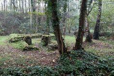 Motruine, Genk, Limburg  Taken by Michel Egyed Plants, Plant, Planting, Planets