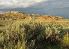 2. Fossil Butte National Monument