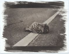 © Uliana Goncharova Original Vandyke Print Owl. Unseen.