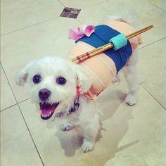Cute sushi dog