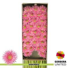 Gerbera, Rugs, Home Decor, Farmhouse Rugs, Decoration Home, Room Decor, Home Interior Design, Rug, Home Decoration