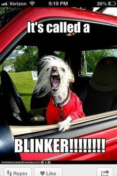 It's called a blinker! Smart dog.