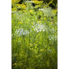 The Sarah Raven Foliage Collection Cut Flower Garden, Flower Seeds, Cut Flowers, Dream Garden, Garden Planning, Hydrangea, Raven, Flora, Delicate
