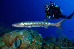 Little Cayman dive trip in 2011 - and we're going back in a few weeks!