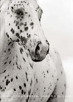 ˚Leopard Appy in Black and white