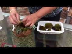 Haciendo un kusamono, muy fácil con Happy Pot - YouTube