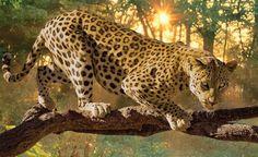 Car Wallpapers, Big Cats, Jaguar, Nars, Panther, Ebay, Animals, Castle, Photography