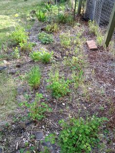 I believe this is the perennial bed in our garden. You can tell I'm not the gardener at my house.  —Rod Boyce, managing editor.