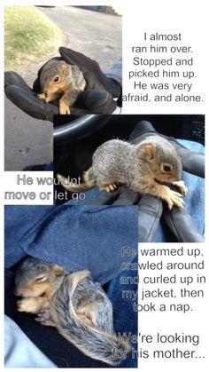 So I found a baby squirrel yesterday.... (So cute!!)