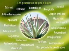 LES 23 Commandement de Forever l 'Aloe Vera