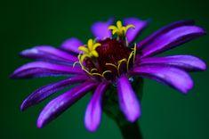 Composição na fotografia de flores