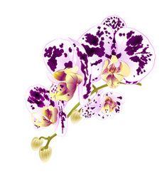 https://www.vectorstock.com/royalty-free-vector/branch-of-violet-orchids-vector-1961793