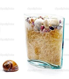 More of the ocean thing I love Different Textures, Little Things, Sea Shells, Home Accessories, Vase, Stock Photos, Ocean, Seashells, Home Decor Accessories