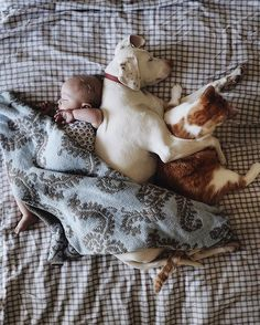 We're in Love With This Unlikely Cuddling Duo - News Tips & Advice | mom.me