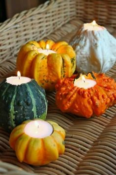 Gourd candles: http://www.stylemepretty.com/living/2014/11/18/the-best-thanksgiving-diys/