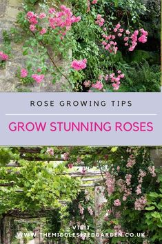 Expert head gardener, Neil Miller of Hever Castle rose gardens, explains how to choose, care for and feed roses. Including why your rose isn't flowering and can you move roses? #gardening #garden #middlesizedgarden #backyard
