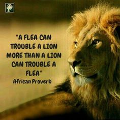 African Proverbs - 300 Inspirational Proverbs and Quotes