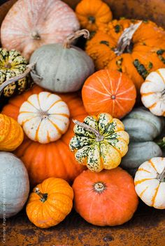 5 Stock Photo Images of Pumpkins and Gourds with Vibrant Color Variations - Gif Life