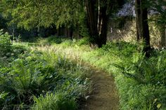 Soft and shady path in a Cotswold garden, designed by Dan Pearson.