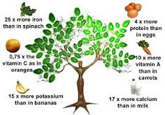 Did you Know Moringa Tree? The Miracle Tree of LifeMany people do not know about Moringa tree. It is a miracle tree of life and have been used for medical uses in many countries. It has great health be. Okra Water, Spinach Protein, Sante Bio, Miracle Tree, Cholesterol Lowering Foods, Cholesterol Symptoms, Cholesterol Levels, Acide Aminé, Nutrition