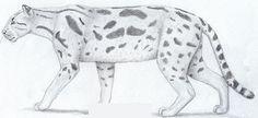Schizailurus.