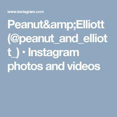 Peanut&Elliott (@peanut_and_elliott_) • Instagram photos and videos