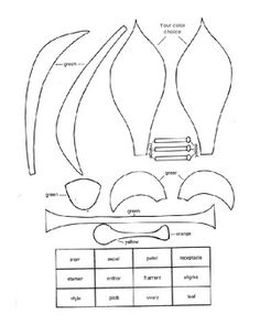 This worksheet describes the parts of the flower. Students