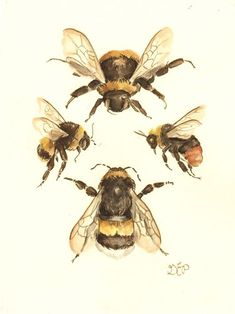 Image result for watercolour bee