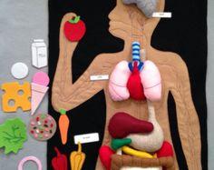 Anatomía humana sentido conjunto juguete de la por Myfelthome