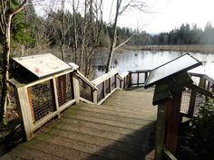 Hazel Wolf Wetlands -- Sammamish, WA. Don't worry, there aren't any wolves.