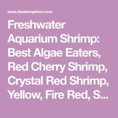 Ideal Freshwater Aquarium Plants For Your Shrimp Aquarium Algae, Aquarium Store, Live Aquarium Plants, Home Aquarium, Planted Aquarium, Aquariums, Freshwater Aquarium Shrimp, Freshwater Fish, Saltwater Tank