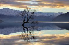 The Wanaka Tree by Mark Meredith - Photo 41495188 - 500px