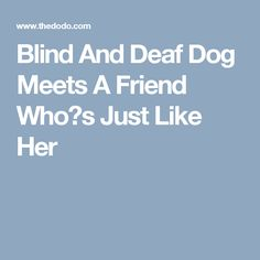 Blind And Deaf Dog Meets A Friend Who?s Just Like Her