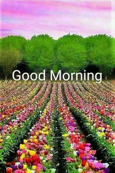 472 best Good Morning Gif photos by sonusunariya Good Morning Sister, Good Morning Thursday, Morning Morning, Good Morning Happy, Morning Wish, Lovely Good Morning Images, Good Morning Flowers, Good Morning Picture, Morning Pictures