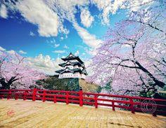 Hirosaki Castle Japan Cherry Blossom 弘前城 桜