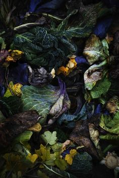 colours /nature /food