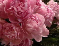 more peonies. so pretty.